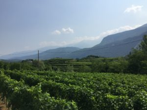 Blick von den Weinbergen im Sarca Tal zur Burg Drena